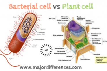 CELL ORGANELLES: THE CHLOROPLAST